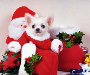 christmas, dogs, and cute image