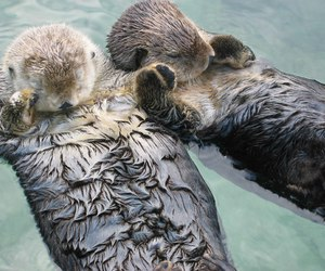animals, holding hands, and otters image