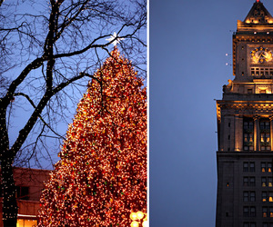 boston, branches, and christmas image