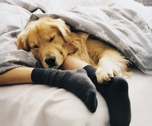 dog, bed, and animal image