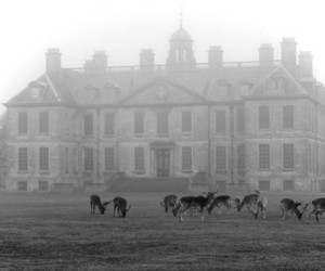 black and white, deer, and fog image