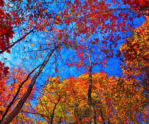 autum, colors, and leaves image