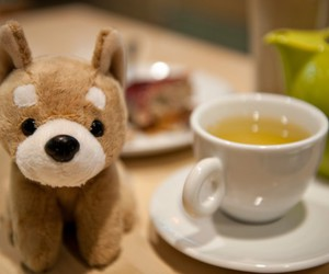 dog, shiba inu, and tea image
