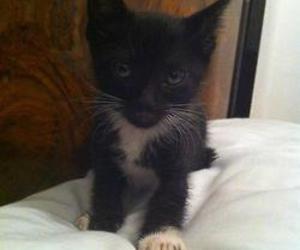 <3, kitty, and gatita image