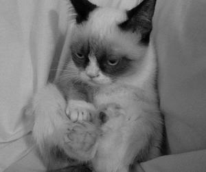 cat, grumpy cat, and black and white image