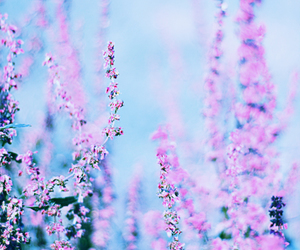 beautiful, pink, and blue image