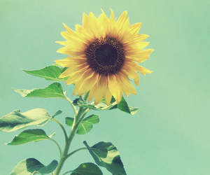 flower, yellow, and sky image