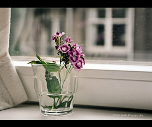 curtains, flowers, and purple flowers image
