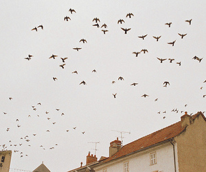 birds, photography, and vintage image