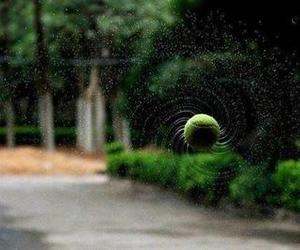 tennis, ball, and funny image