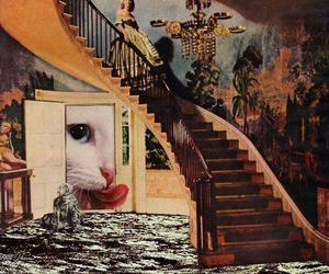 cat and psychedelic image
