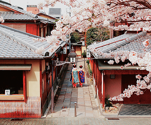 japan, kyoto, and sakura image