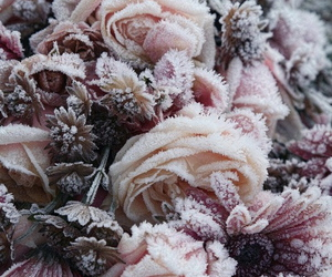flowers, rose, and winter image