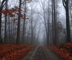 forest, autumn, and leaves image
