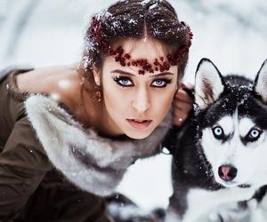 dog, husky, and snow image