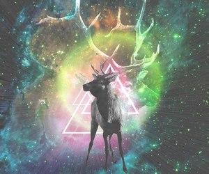 animal, light, and triangle image