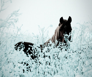frost, horse, and nature image