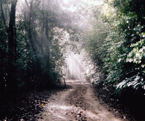 dreamy, forest, and light image