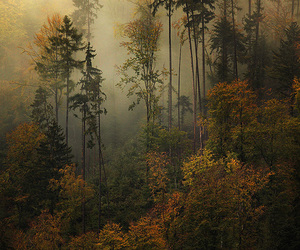 forest, nature, and autumn image