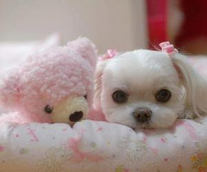 pink, teddy, and white image