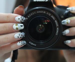 animal, gufo, and nail image