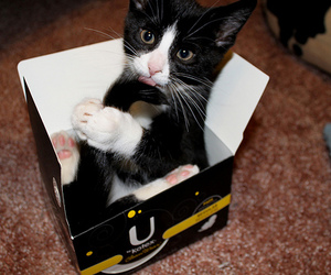 black, box, and kitten image