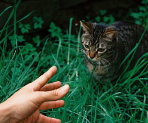 cat, grass, and hand image