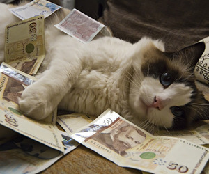 cat, money, and cute image