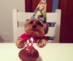 dog, birthday, and cupcake image