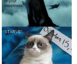 grumpy cat and cat funny harry potter image