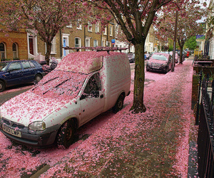car, pink, and flowers image