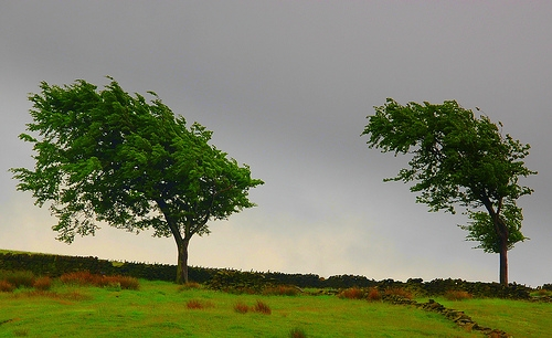 trees, uk, and wind image