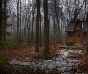 forest, house, and cabin image
