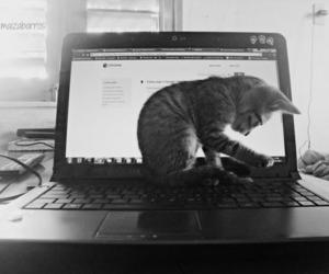 <3, black and white, and cat image