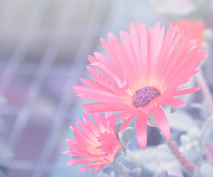 bokeh, canon, and pastel image