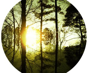 circle, forest, and tree image
