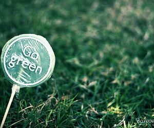 green and photography image