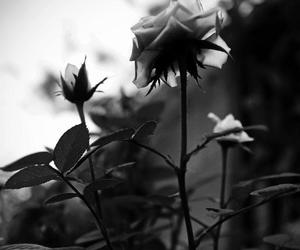 black and white, flower, and girly image