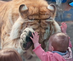 tiger, baby, and animal image