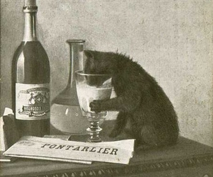 absinthe, bourgeois, and cat image