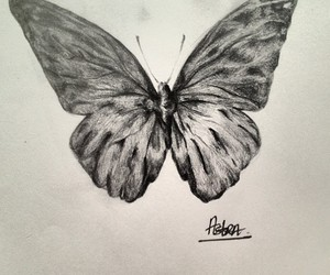 butterfly, drawing, and fly image