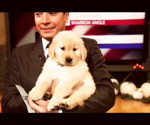 golden retriever, jimmy fallon, and puppy image