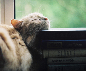 cat, book, and cute image