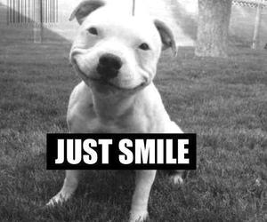dog, smile, and simile image