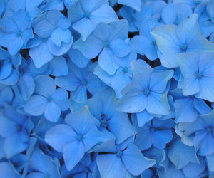 flowers, shannon hoon, and nikko blue image