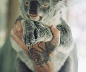 Koala, animal, and tattoo image