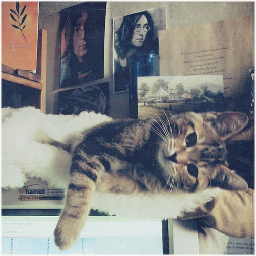 cat, john lennon, and cute image