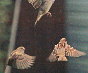 bird, fly, and vintage image