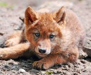 wolf, animal, and cute image