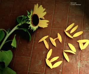 flowers, sunflower, and the end image